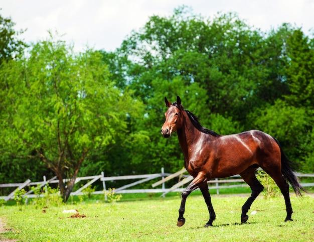 Portrait of beautiful horse in summer