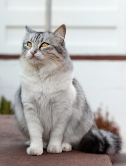 Portrait of a beautiful long-haired cat