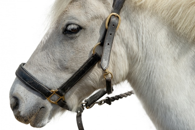Portrait of a beautiful white horse on white