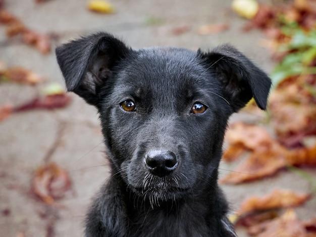 Portrait of a black puppy.
