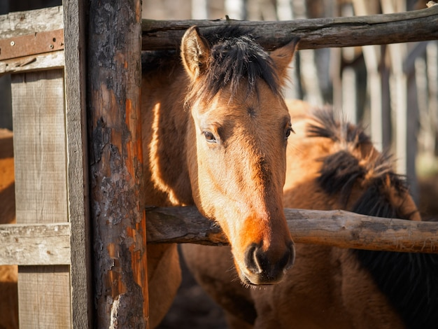 Portrait of a brown horse in a paddock. Premium Photo