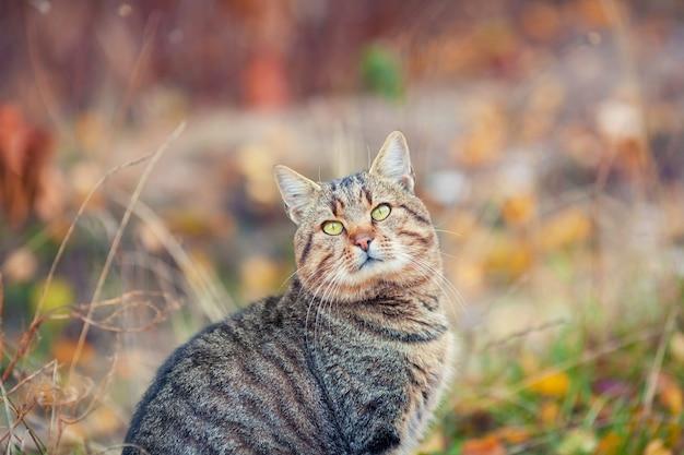 Portrait of cat outdoors in autumn
