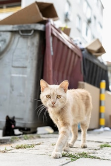 Portrait of cat walking down the street