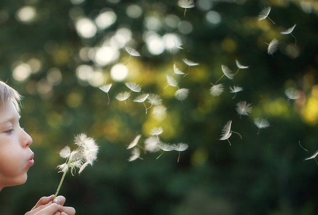 Portrait child outdoors in nature blowing a dandelion at sunny summer evening.