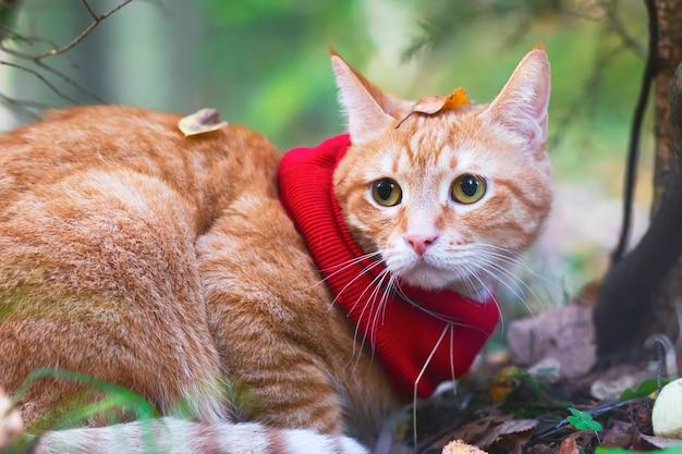 Портрет крупным планом рыжего кота в платке в осенних листьях на фоне леса и деревьев. на открытом воздухе