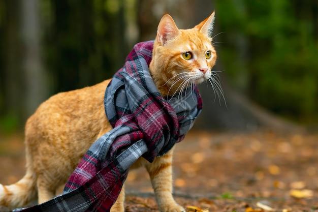 Портрет крупным планом рыжего кота в шарфе в лучах солнца на фоне леса. на улице и на улице.