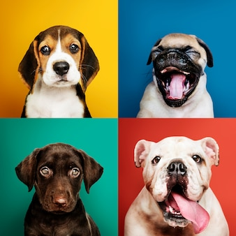 Portrait collection of adorable puppies