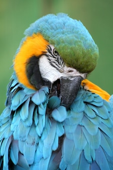 Portrait of colored parrot in a zoo