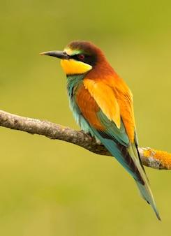 Portrait of a colorful bird