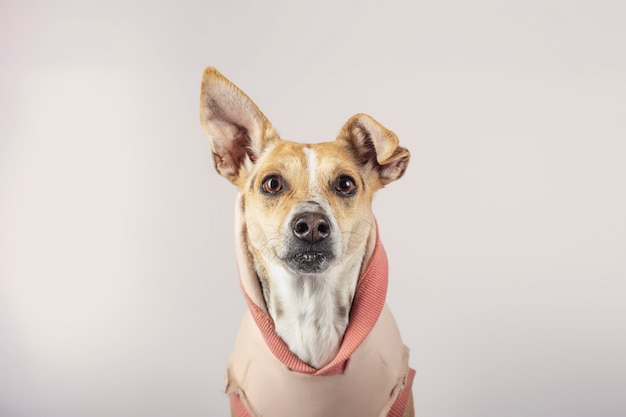 Portrait of crossbreed dog looking at camera on beige background. dog for adoption.