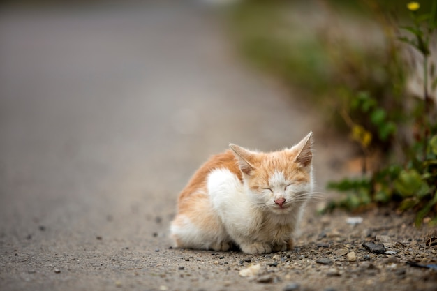 Portrait of cute adorable ginger small white young cat kitten with closed eyes sitting dreaming outdoors on small pebbles posing on blurred light colorful sunny summer copy space background.