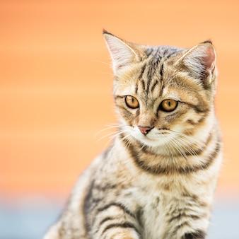 Portrait of a cute brown cat
