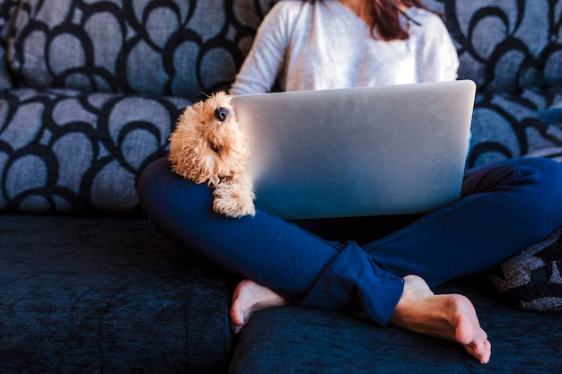 Portrait of a cute brown toy poodle with his young woman owner at home. using laptop. daytime, indoors.