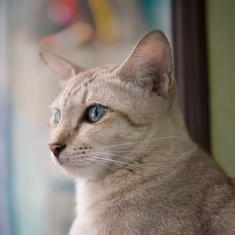 Portrait of a cute cat with blue eyes