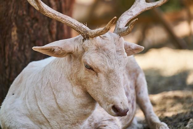 Portrait of cute deer on farm
