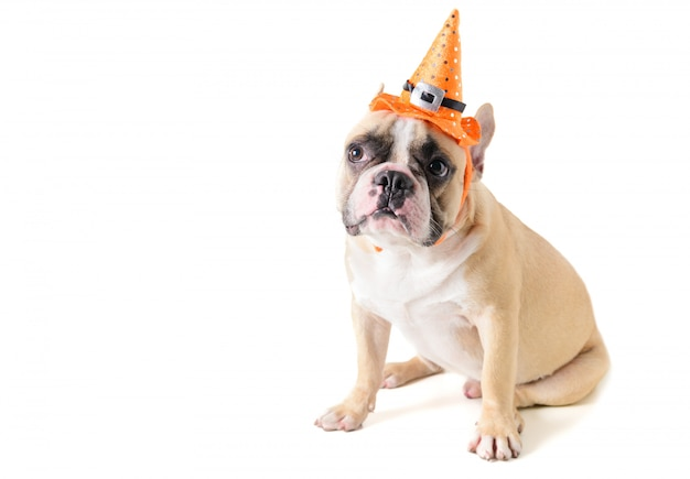 Portrait of cute french bulldog with hat halloween isolated