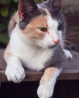 Portrait of a cute funny cat.