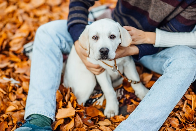 Portrait of cute golden labrador in autumn park with his owner hands.