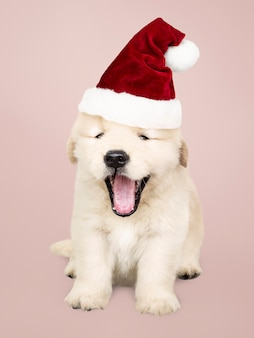 Portrait of a cute golden retriever puppy wearing a santa hat