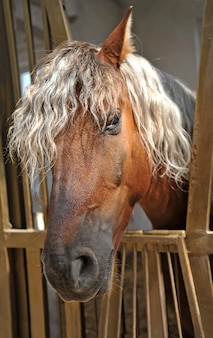 Portrait of cute horse with  mane of blond color