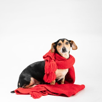 Ritratto di simpatico cagnolino coperto di sciarpa