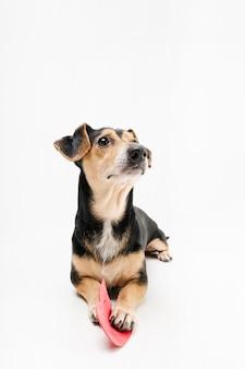 Ritratto di piccolo cane sveglio che osserva via