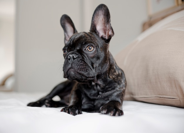 Portrait of cute little doggie