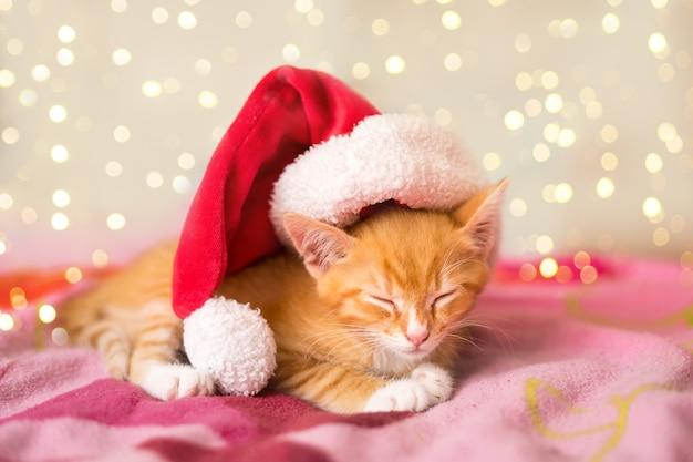 Portrait of cute little kitten wearing santa's hat sleeping on a violet blanket. high quality photo