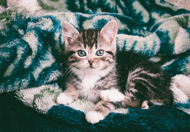 Portrait of a cute little kitty on the green plaid