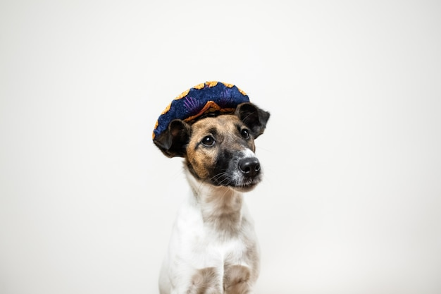 Portrait of cute puppy in mexican traditional hat posing on white  smooth fox terrier dog dressed up in hat hat sitting in isolated