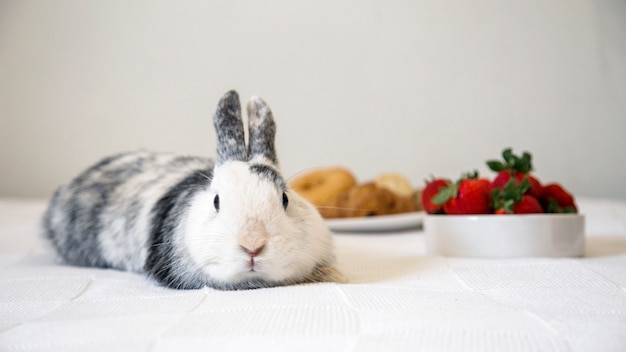 Portrait of a cute rabbit lying on table