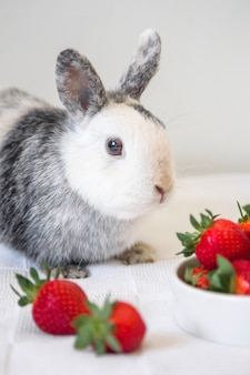 Portrait of a cute rabbit and strawberry