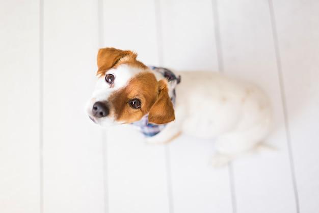 Portrait of a cute small dog wearing a blue bandana