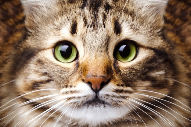 Portrait of a cute, striped cat with green eyes