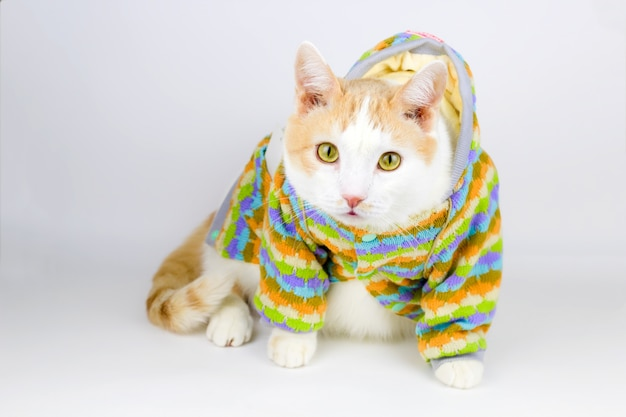 Portrait of cute white and red cat in a stripped knitted  jacket on a white background