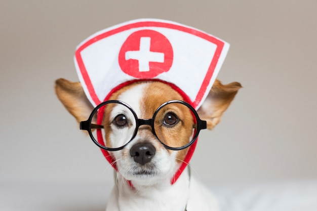 Portrait of a cute young small dog sitting on bed. wearing stethoscope and glasses. he looks like a doctor or a vet.