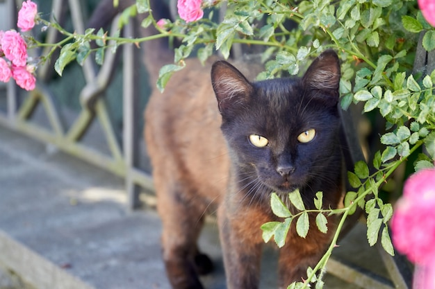 Portrait of dark brown apathetical cat in the garden outdoors