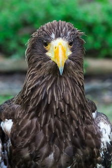 Portrait of a eagle symbol the hunting