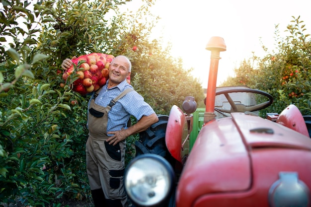 Portrait of farm worker holding sack full of apple fruit next to retro styled tractor machine