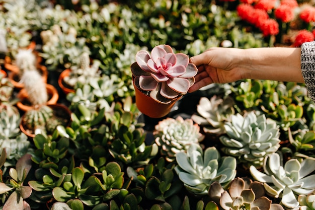 Portrait of female hand holding brown pot with succulent