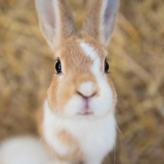 Portrait of fluffy rabbit by top view