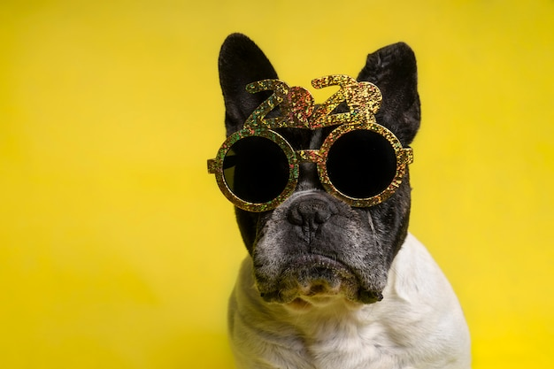 Portrait of french bulldog with year-round party glasses with text 2020