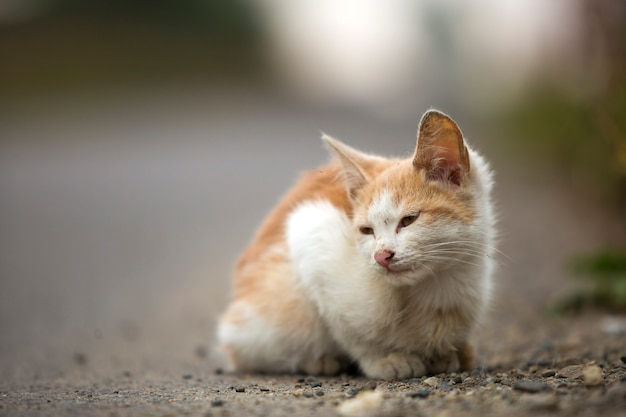 Portrait of funny cute adorable ginger small white young cat kitten