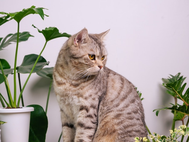 공기와 나무 테이블에 초상화 생강 고양이 방에 집 식물 monstera philodendron 뱀 식물을 정화