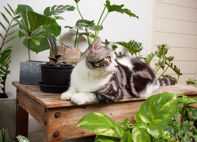 Portrait ginger cat on wood table with air purify  house plants monstera,philodendron selloum, zamioculcas zamifolia,snake plant,spotted betle, ficus lyrata,rubber plant,cactus in white room