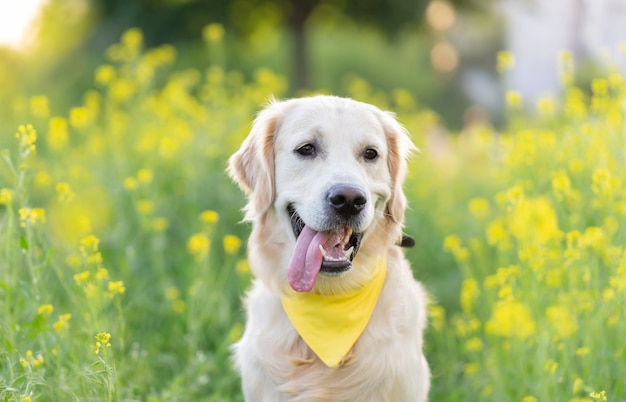 Portrait of golden retriever dog surrounded by blooming flowers