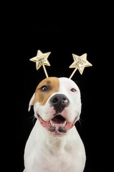 Портрет счастливая собака празднует новый год в костюме диадемы. изолированные на черном фоне