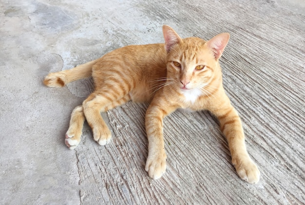 Portrait of happy red cat. home cat in relax activity. pet - smartphone snapshot