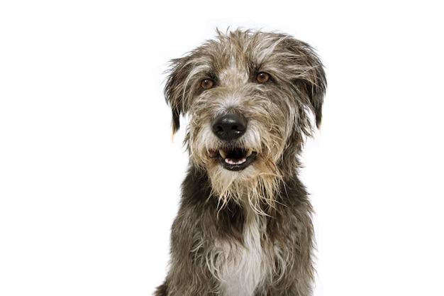 Portrait happy sheepddog puppy looking side.
