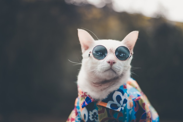Portrait of hipster white cat wearing sunglasses and shirt
